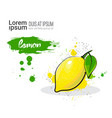 lemon hand drawn watercolor fruit on white vector image vector image