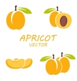 flat apricot icons set vector image vector image