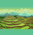 landscape rice field terraces asian rural vector image
