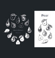 hand drawn pear icons vector image vector image