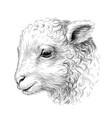 lamb sketch hand-drawn black-and-white portrait vector image