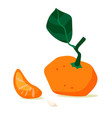 tangerine fruit mandarin slice cartoon vector image