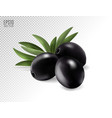 black olives with leaves photo-realistic vector image vector image