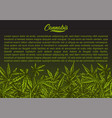cannabis green background vector image