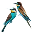 Watercolor european bee-eater bird vector image vector image
