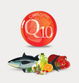coenzyme q10 healthy eating vector image