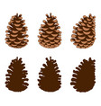 group of different pine cones vector image vector image