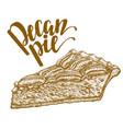 hand drawn of pecan pie vector image vector image