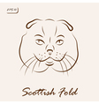 Scottish Fold vector image vector image