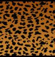 leopard pattern texture design vector image