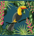 toucan with natural leaves plants background vector image vector image