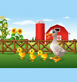 cartoon duck family in the farm vector image