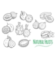 Exotic tropical fruits isolated sketch icons vector image