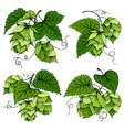 Hops graphics set