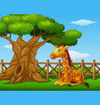 animal giraffe sitting beside a tree inside the fe vector image