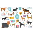 Dog info graphic template Heatlh care vet vector image