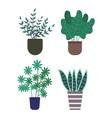 haworthia pot with soil foliage and flora set vector image