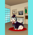 dog dressed up in a fancy outfit vector image