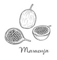 maracuja passion fruit vector image