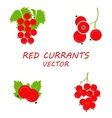 flat red currants icons set vector image vector image