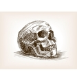 Human skull sketch style vector image