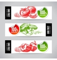 Set of banners with hand drawn sketch vegetable vector image vector image