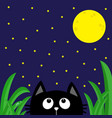 black cat looking stars and moon in the dark vector image vector image