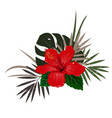 bouquet composition with red hibiscus flower and vector image vector image
