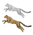 cheetah sketch wild animal icon vector image
