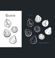 hand drawn guava icons vector image