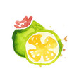 juicy ripe feijoa fruit watercolor hand painting vector image