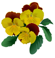 Three yellow pansy flowers with leaves vector image