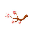 blossoming pink cherry tree sakura branch vector image vector image