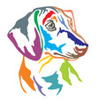 colorful decorative portrait of dog dachshund vector image vector image