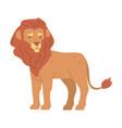 cute lion african animal wild predator jungle
