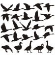 geese silhouette vector image vector image