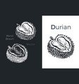 hand drawn durian icons vector image vector image