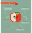 organic infogtaphics vector image vector image