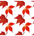 red autumn maple leaves white background im vector image vector image
