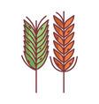 wheat spike hello autumn design icon vector image