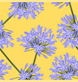 blue purple agapanthus on yellow background vector image vector image