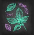 chalk sketch of basil vector image