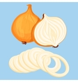 fresh onion vector image