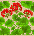 geranium branches pattern vector image