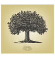 Tree in engraving style vector image vector image