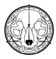 animal skull on background alchemical seal vector image