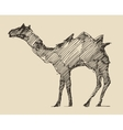 Camel Engraved Hand Drawn Sketch vector image
