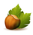hazelnut with green leaves icon vector image vector image