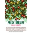 fresh berries sketch poster vector image vector image