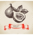 Hand drawn sketch fruit fig Eco food background vector image vector image